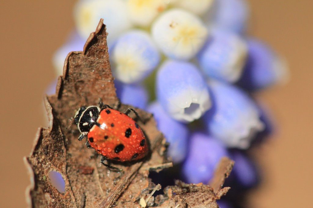 Spring Flowers 2014 265