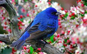 healing-bird